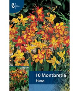 Montbretia Mixed (Crocosmia)