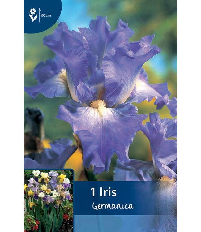 Iris Germanica Blue