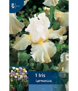 Iris Germanica White