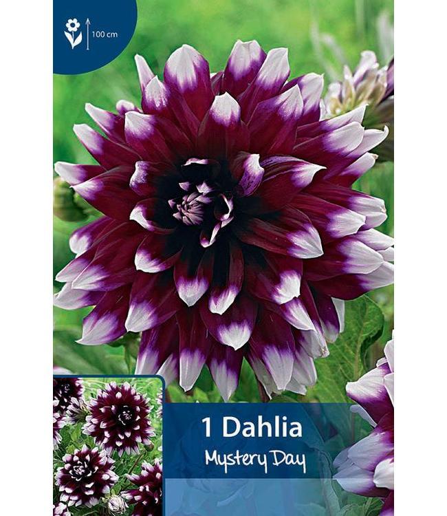 Dahlia Mystery Day