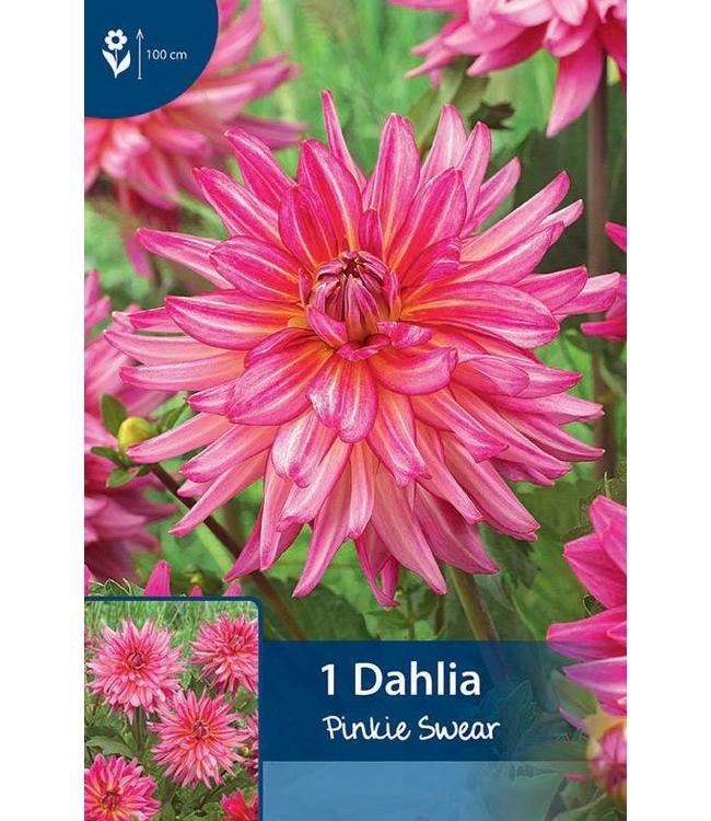 Dahlia Pinkie Swear