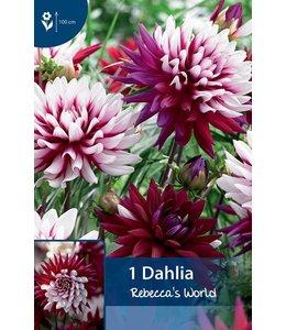 Dahlia Rebecca's World
