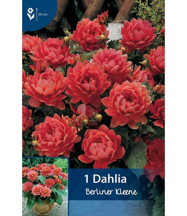 Dahlia Berliner Kleene