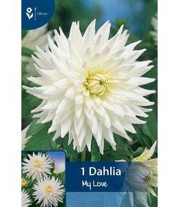 Dahlia My Love