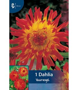 Dahlia Vuurvogel