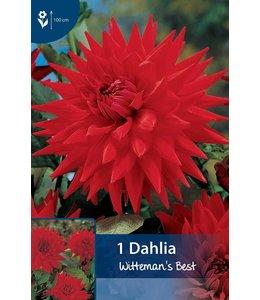 Dahlia Witteman's Best