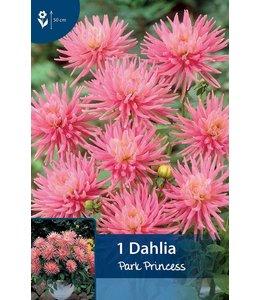 Dahlia Park Princess