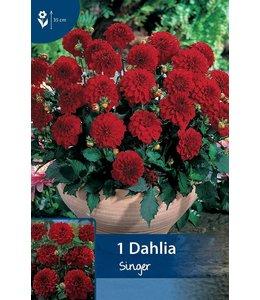 Dahlia Singer