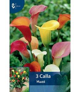 Calla Mixed (Zantedeschia)