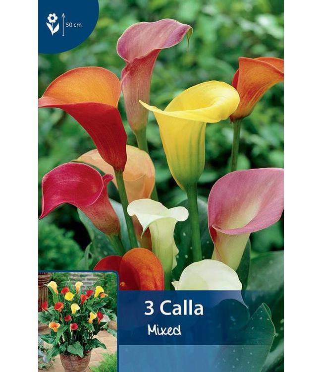 Calla Mischung (Zantedeschia)