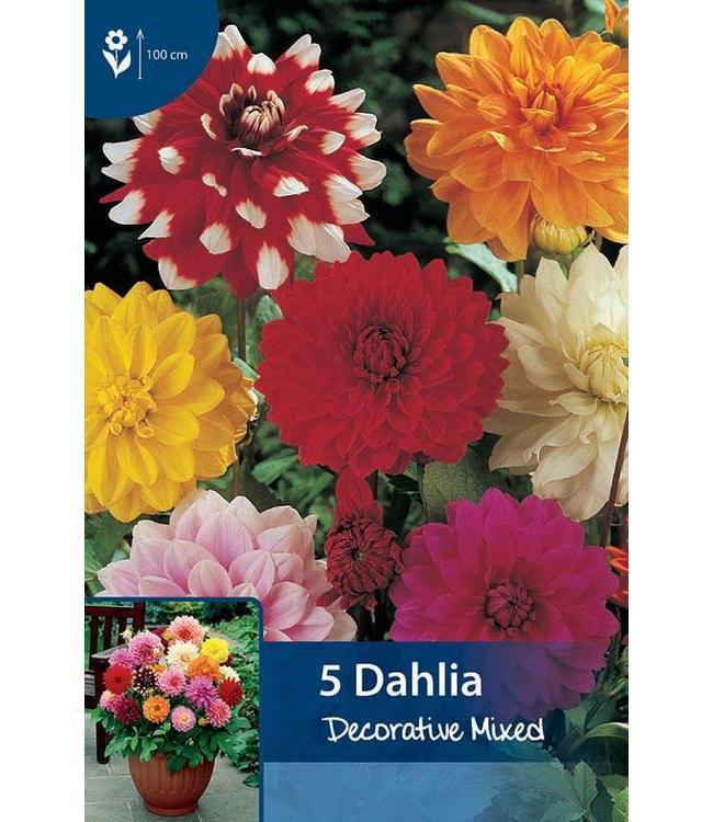 Dahlia Decoratief Gemengd