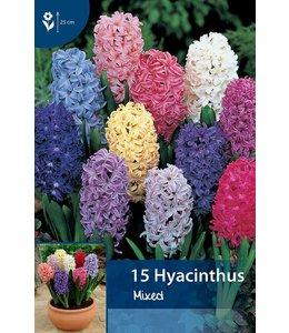 Hyacint Gemengd