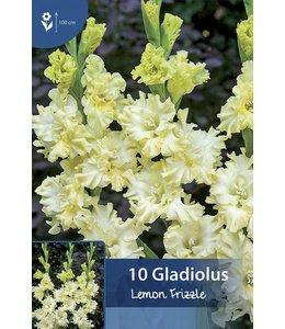 Gladiolen Lemon Frizzle