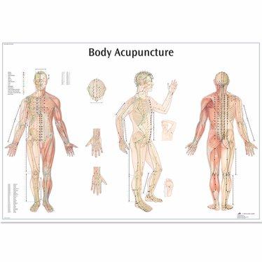3B Scientific Poster Body Acupunture