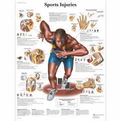 3B Scientific Poster sport Injuries Chart