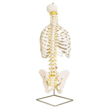 Spine + ribs Classic flexibel A56