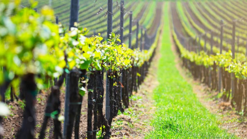 Wijnproeverij Voorjaar 2019