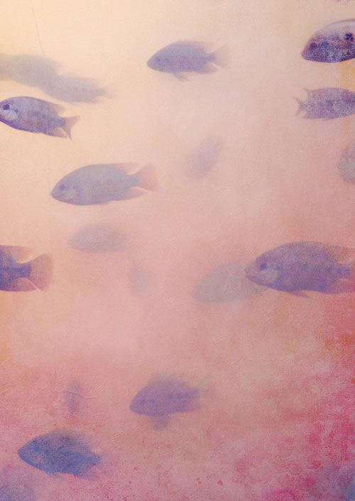 """Akustibilder mit Motiv """"Fischen"""""""
