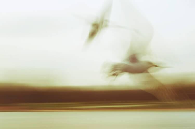 "Akustikbilder mit Motiv ""Wings"""