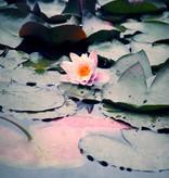 "Akustikbild inkl. Motiv ""Water Lily"""
