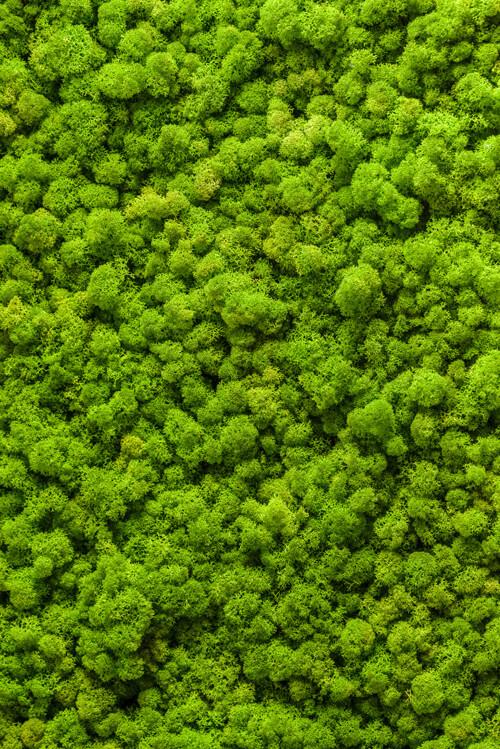 "Akustikbild mit Motiv ""Moss Wall"""