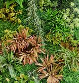 """Akustikbild mit Motiv """"Plants"""""""