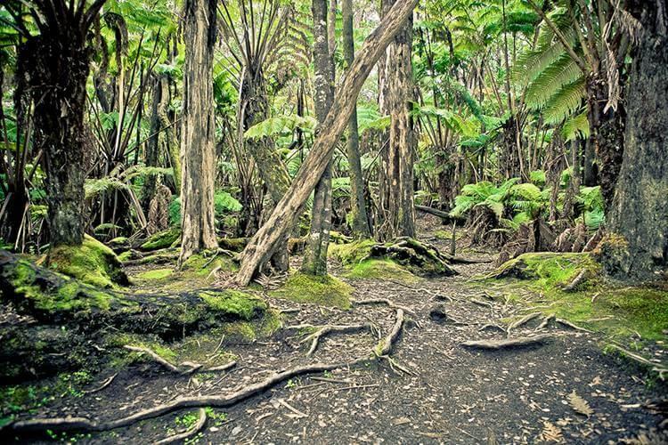"Akustikbild mit Motiv ""Hawaiian Forest"""