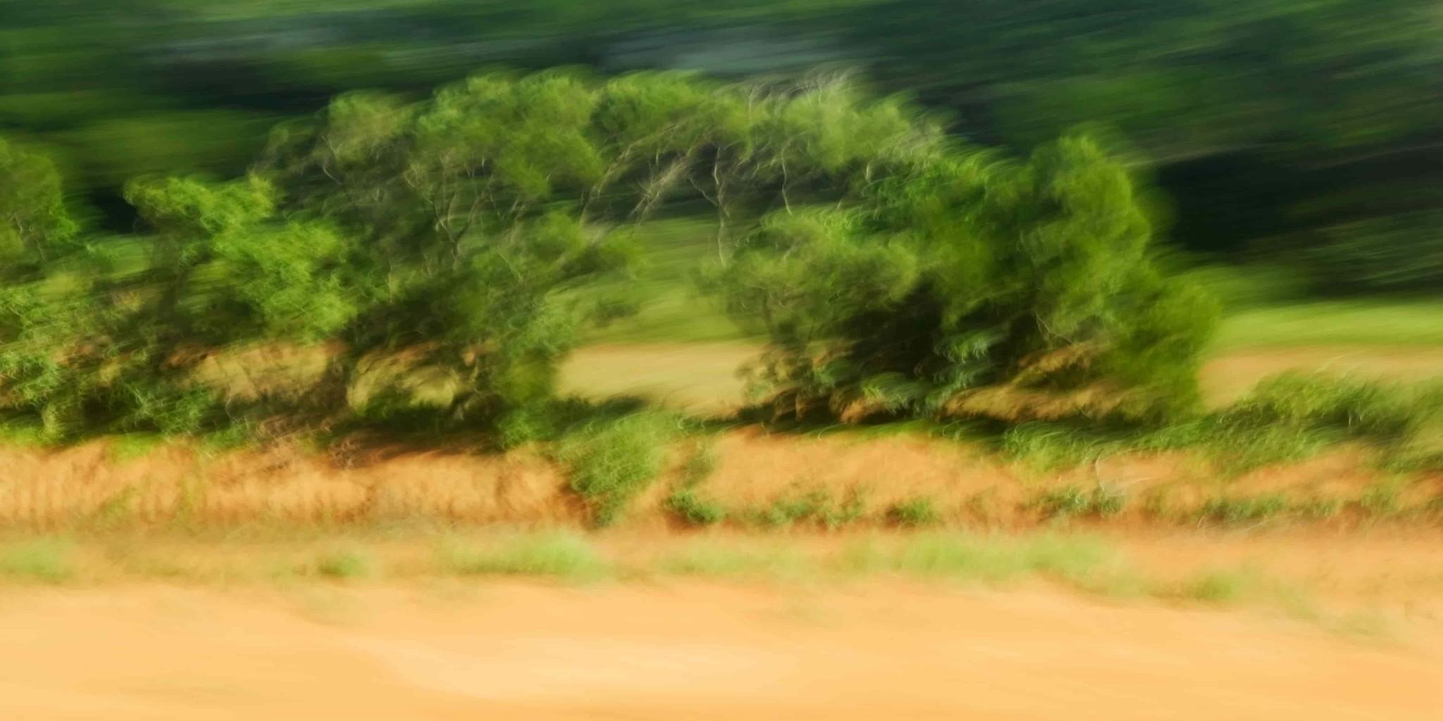 "Leinwandprint ""Buschwolke"" - ohne Akustikämmung"