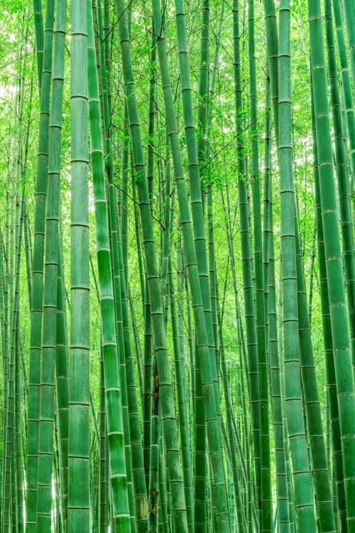 """Akustik Raumteiler mit Kunstmotiv """"Bamboo Grove"""""""