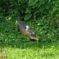 Natur Foam 3D Target Hare - Running