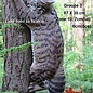Natur Foam NATUR FOAM 3D TARGET WILD CAT - CLIMBING