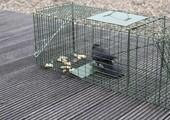 Vangkooi vogels
