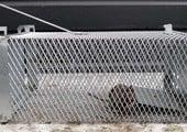 Vangkooi muizen