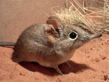 Wat u moeten weten om muizen te bestrijden