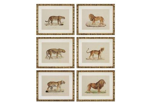 EICHHOLTZ Prints Lion, Tiger, Jaguar