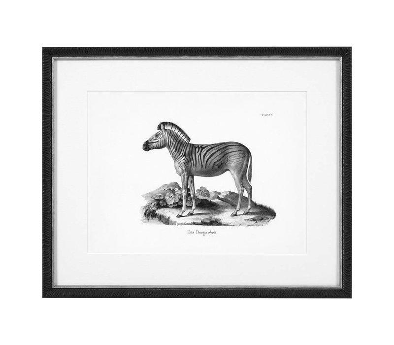 Prints Historical Animals set of 6