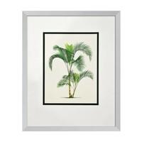 Prints Palms set of 4