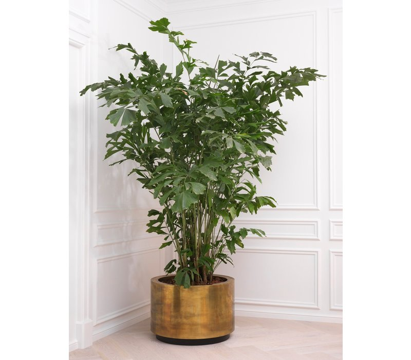 Pflanzer 'Jasper' - L