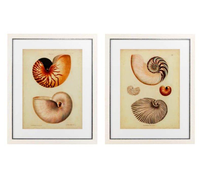 Antique Nautilus prints ingelijst - set van 2