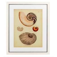Antique Nautilus prints framed - set of 2