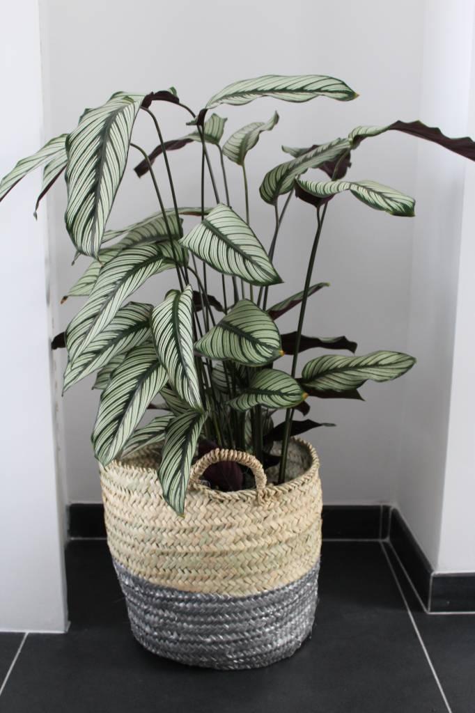 Rieten Manden Voor Planten.Riadlifestyle Rieten Mand Zilver