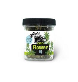 Astri Garden CBD Blume - XQ - 20%