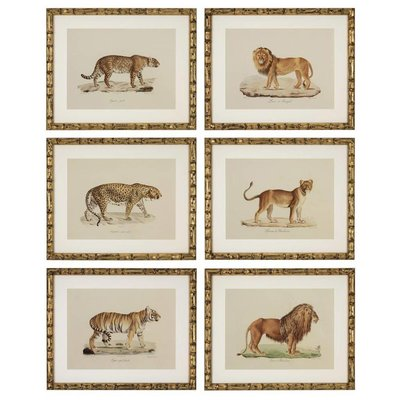 Eichholtz Prints Lion, Tigre, Jaguar set of 6