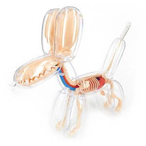 "4D Master 10"" Balloon Dog Anatomy (Clear) by Jason Freeny"