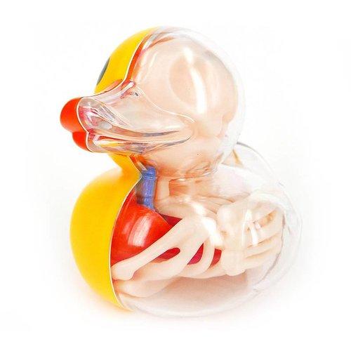 "4D Master 4"" Bathing Ducky Anatomy by Jason Freeny"