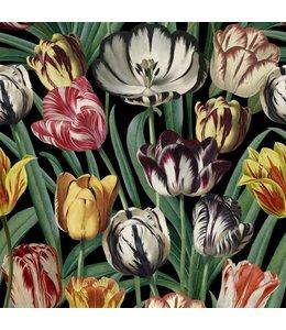 MIND THE GAP Tulipa