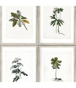 MIND THE GAP Botany
