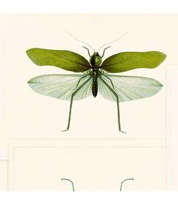 MIND THE GAP Entomology Green