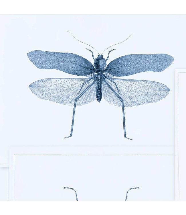 MIND THE GAP Entomology Blue