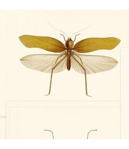 MIND THE GAP Entomology